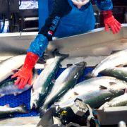 Rekordeksport av sjømat