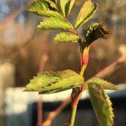 Dårlig nyhet for hagen: Disse vekstene kan ha råtnet og blomstret for tidlig
