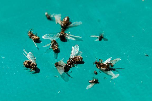 Ny studie: Insektene forsvinner - forsker kaller det et svært alvorlig varsko