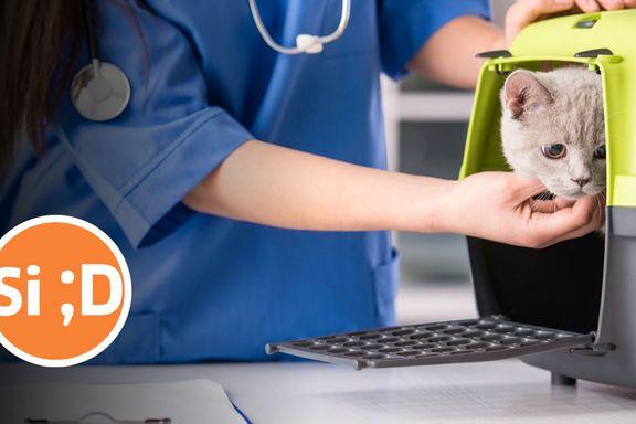 Ikke alle har råd til å betale for at en veterinær skal bekrefte det åpenbare