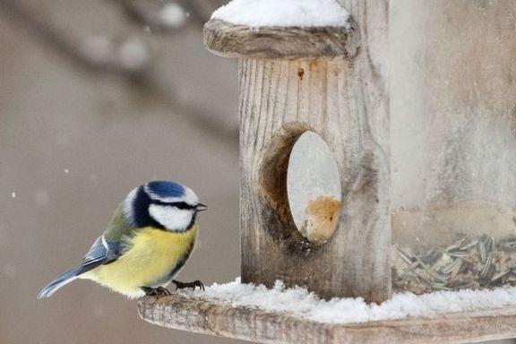 Synes du det er få gjester på fuglebrettet? Med disse grepene gjør du hagen din attraktiv for småfuglene.