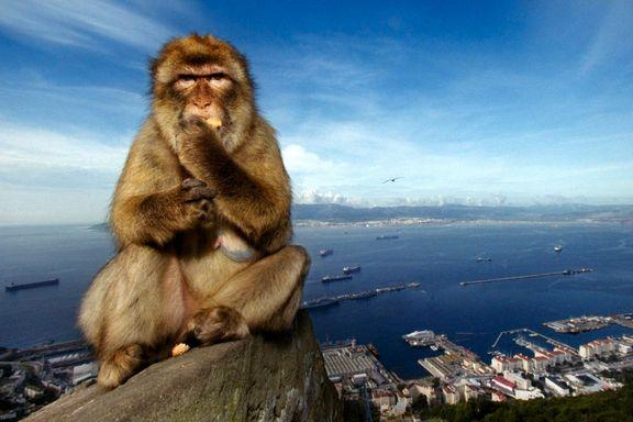 Gibraltar-krav skaper brexit-problemer