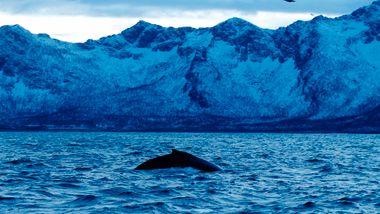 Lydforurensning er en trussel mot livet i havet