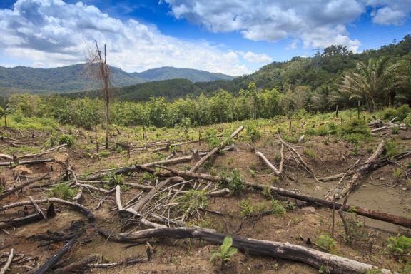 Regnskogfondet: Mer enn halvparten av regnskogen er ødelagt