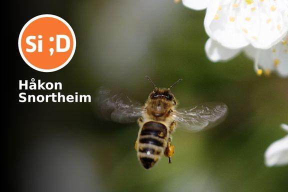 Historien om blomsten og bien må forbli mer enn en klein samtale med mor og far