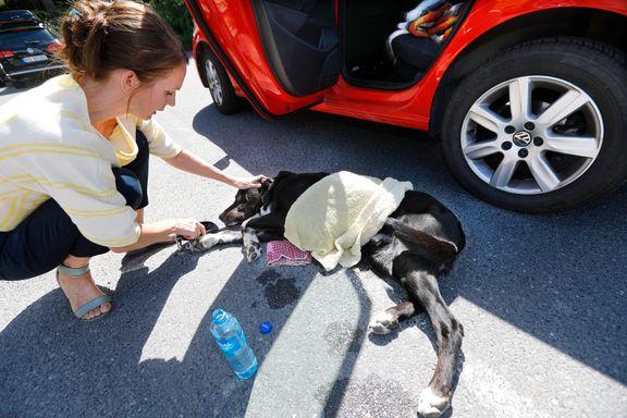 Se tipsene: Slik redder du en hund fra en glovarm bil