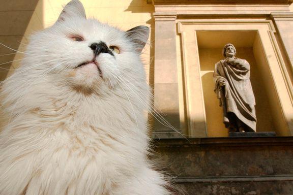 I Russland vokter katter kunstskatter og har egen helligdag