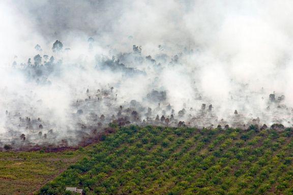 Godkjenner omstridt palmeolje til bruk i diesel