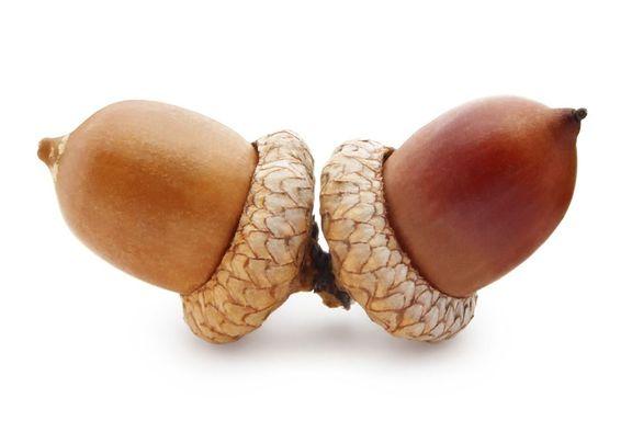 PechaKucha: – Idiotiske testikler. Hvorfor henger dere på utsiden?