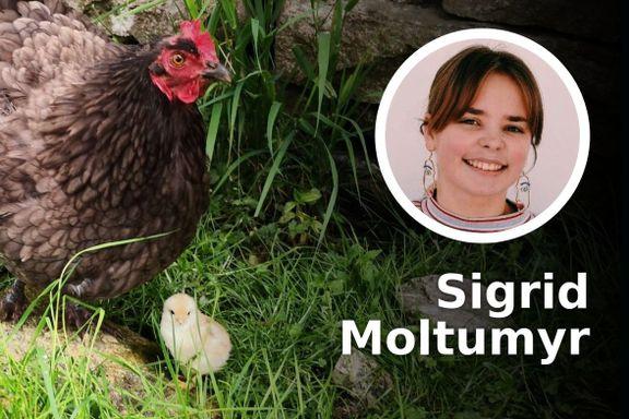 Hilsen fra en MDG-er som har vokst opp på kyllinggård