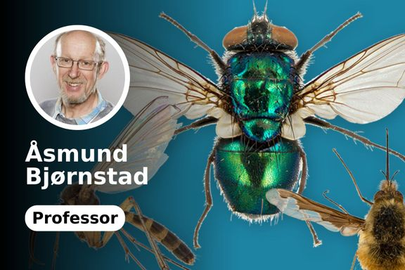 Insektbestøving mindre viktig for matproduksjonen