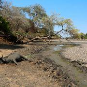 Over 40 millioner trues av sult i det sørlige Afrika