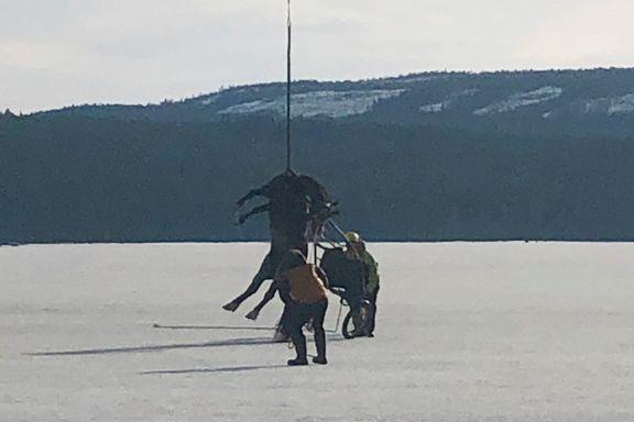 Her heiser helikopteret hesten opp av isen