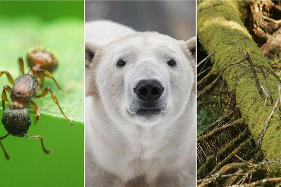Tirsdag lanseres oversikt over 44.000 arter i Norge. Men vi vet egentlig ganske lite.