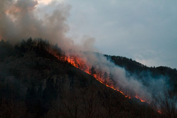 Skogbrann slukket - 120 mål gikk tapt