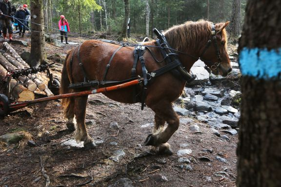 Tømmerkjøring med hest i Marka