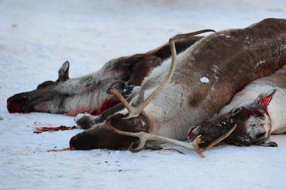 Smitten som er funnet på Hardangervidda, er dødelig for dyrene