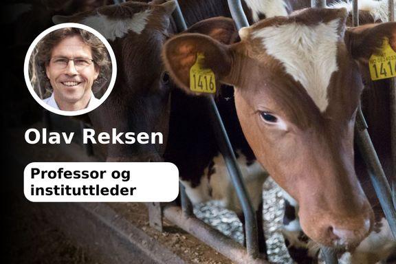 Vi risikerer å ødelegge en husdyrproduksjon norske bønder har jobbet hardt for å optimalisere