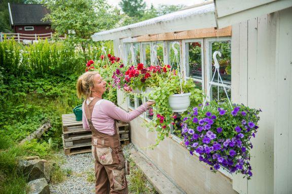 Få sommerblomster som varer helt til frosten kommer