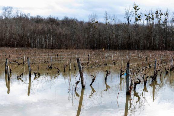 Forskere tror endret klima forsterket kriseår i Champagne, Bourgogne og Loire
