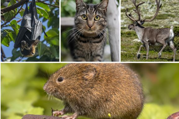 Kampen mot pandemien har i praksis tre mulige utfall. Forskning på disse dyrene kan være viktig.