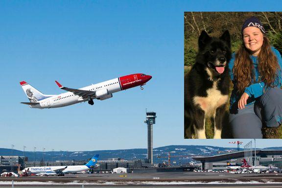Hunden Daik (5) ble kastet rundt i lasterommet på Norwegian-fly