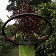 Kaffeprisen doblet på ett år