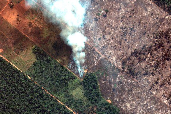 Kjendisene peprer sosiale medier med Amazonas-innlegg. Men ikke alle bildene viser det de tror.