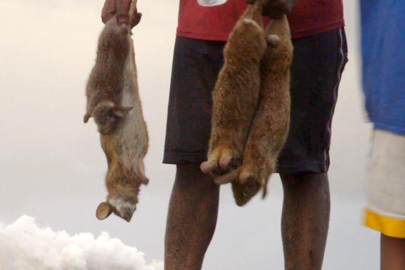 Jakter kaniner med bare nevene