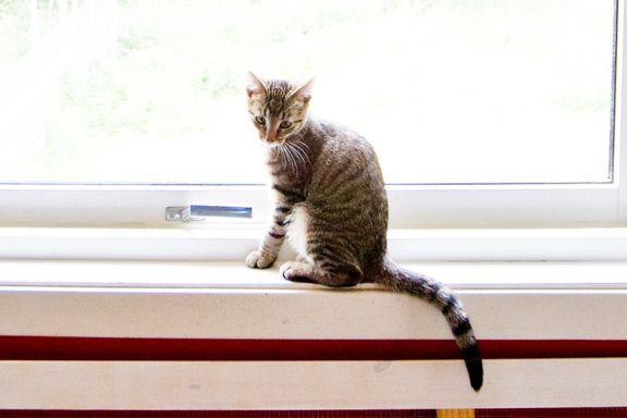 Flere katter faller ut av vinduer når de skal avkjøle seg