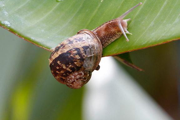 Hvis du ser en snegle: Vær snill mot den!