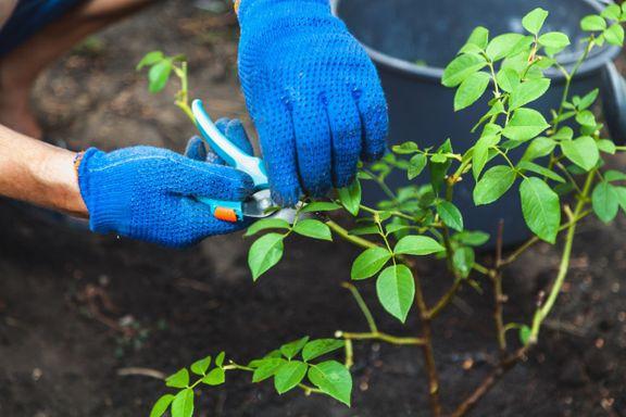 Fem viktige ting du gjør i hagen i mai