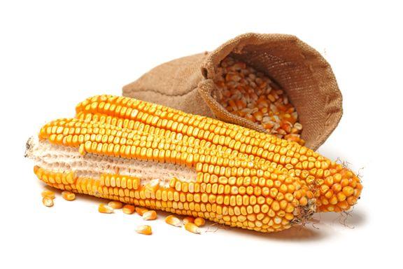 Dagligvarekjedene sammen mot genmodifisert mat