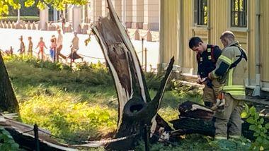 To personer til sykehus i Oslo etter at vinden veltet trær