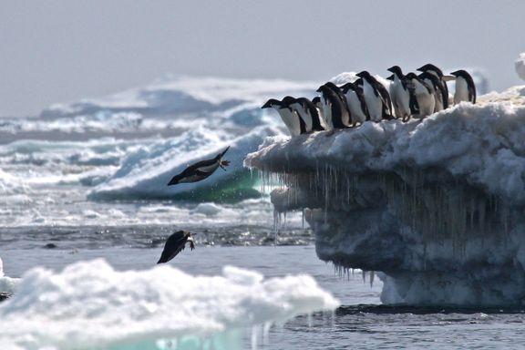 Røkkes Aker BioMarine forplikter seg til å verne pingviner i Antarktis