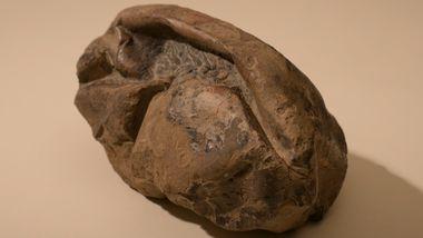 Mystisk Antarktis-fossil var enormt egg