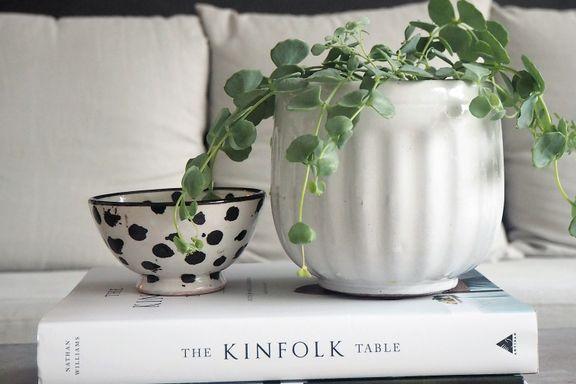 Hvordan påvirker grønne planter hjemmet ditt?
