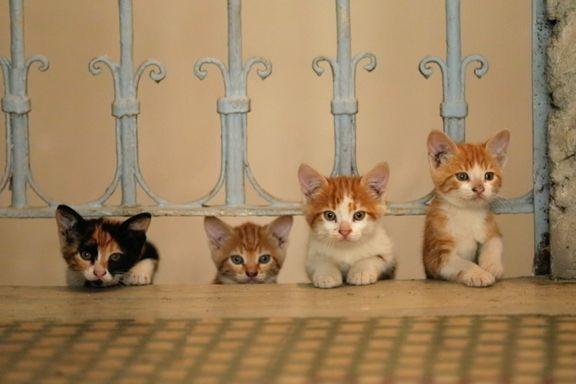 «Kedi» er filmen alle katteelskere må se