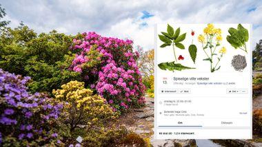 Mange er blitt lurt: – Folk møter opp i Botanisk hage