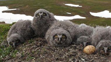 Klimaendringene forandrer Norges klimasoner. Flere dyr risikerer å dø ut.