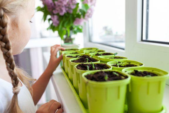 Ukens grønne tips: Slik sår du frø i vinduskarmen