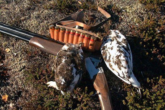 Når Miljødirektoratet leder an i utryddelsespolitikken, mister dyrene sin siste beskyttelse   Dag Øistein Endsjø