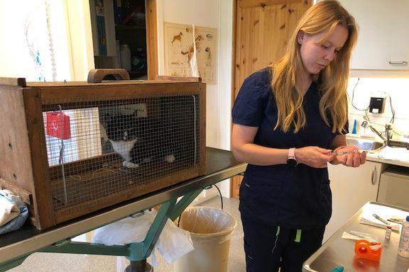 Antall hjemløse katter øker i Norge. Dyrebeskyttelsen ber myndighetene våkne opp.
