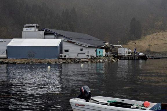 17.200 laks rømte i Sognefjorden
