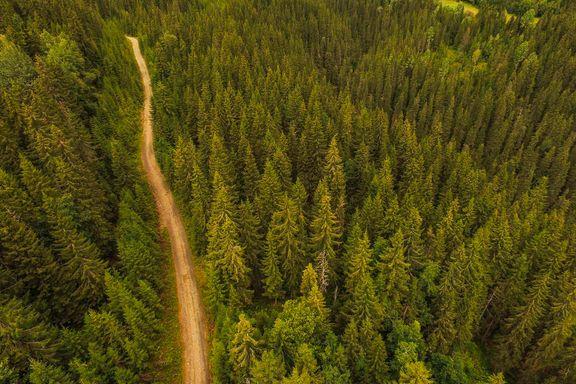 Anne Sverdrup-Thygeson svarer: Mange arter sliter i skogen