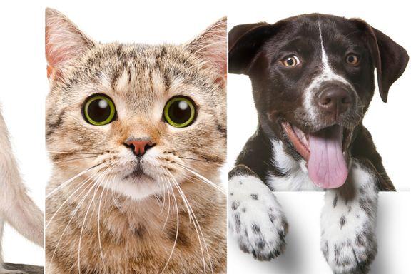 Kan du virkelig forstå en ape, katt eller hund?
