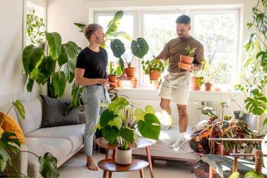 Skal plantene være alene hjemme i ferien? Her er fem ting du bør gjøre før du drar.