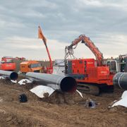 Gnagere og flaggermus stanser milliard-gassrør fra Norge