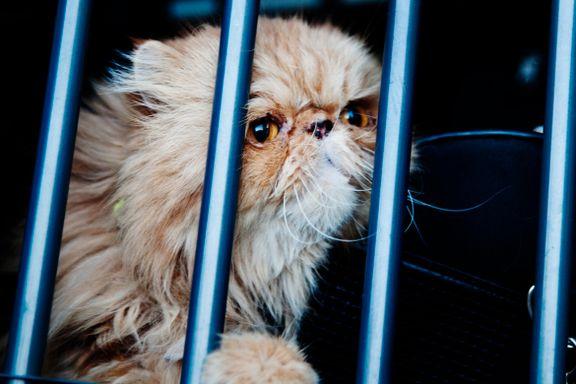 Fikk 4000 tips om dyr som lider