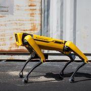 Den firbente robothunden er blitt norsk. Nå har den fått fast jobb hos Røkke.